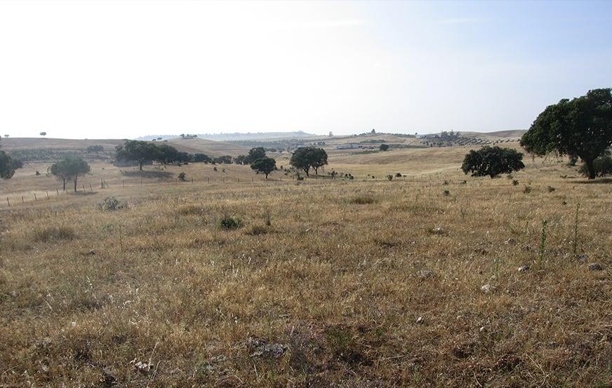 Monte Rocha